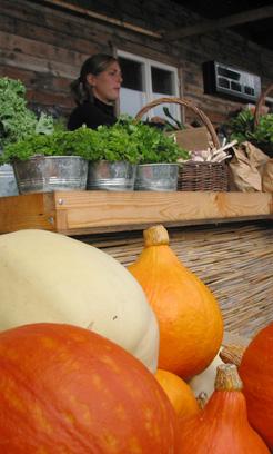 Grönsaksstall med pumpor